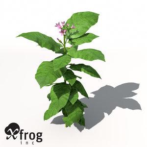 xfrogplants tobacco plant 3d max