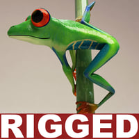 3d red eyed tree frog