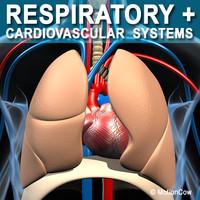 anatomy respiratory human organ 3d lwo