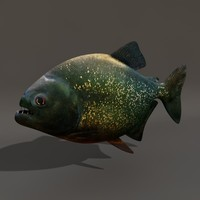 carnivorous fish piranha 3d model