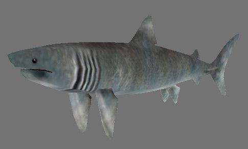 shark games obj