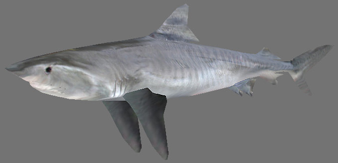 shark games obj