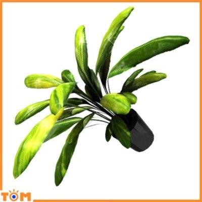 potted fern plant 3d blend