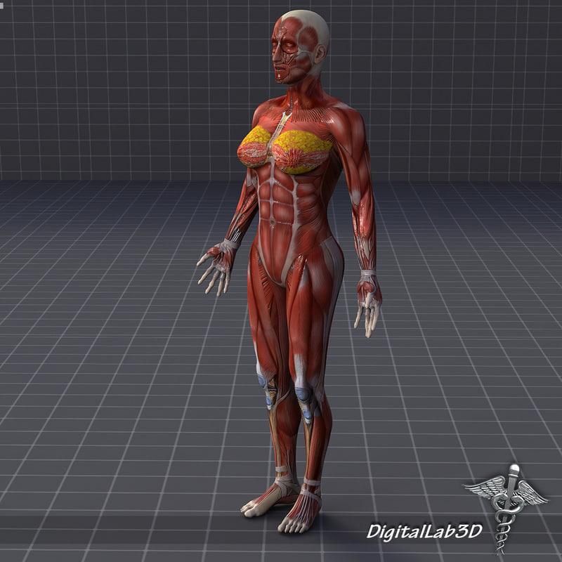 rigged female muscular 3d ma