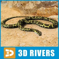 burmese python snakes 3d model