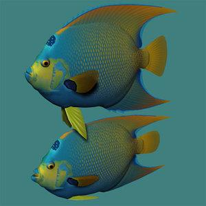 3ds max queen angelfish
