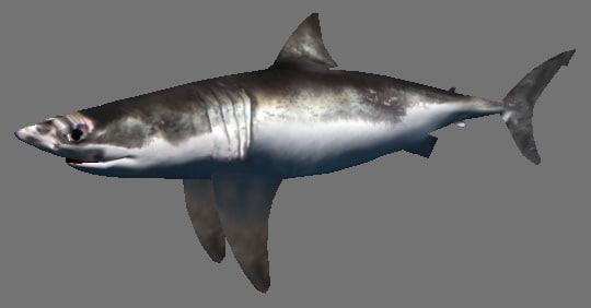 shark games 3d model