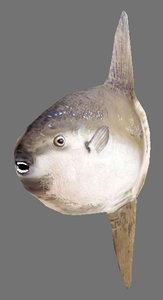 maya fish games