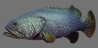 3d model fish games