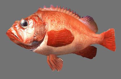 fish games 3d model