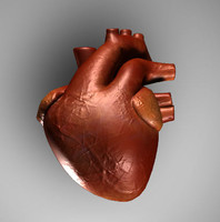 Free 3D Heart Models | TurboSquid