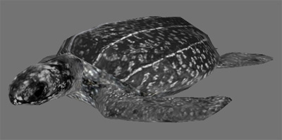 leatherback sea turtle 3d model