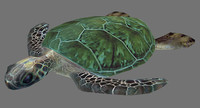 Green sea turtle (Rigged)