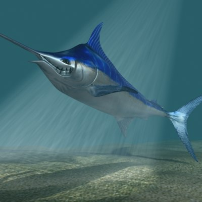3d 3ds blue marlin toon