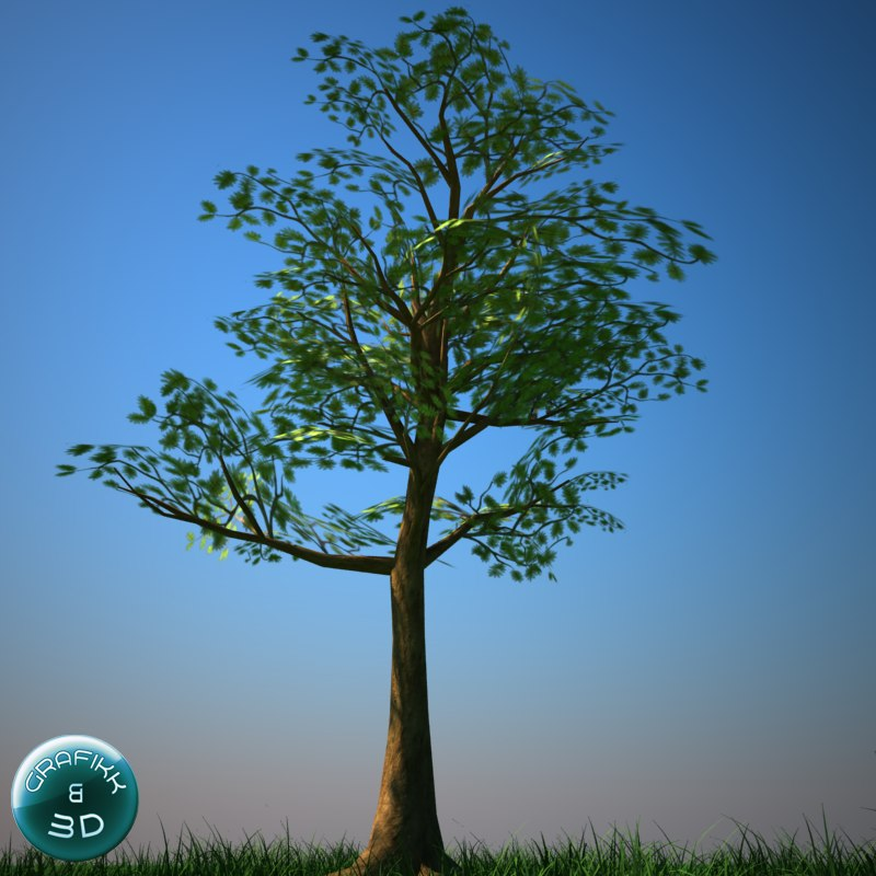 3d tree vegetation model