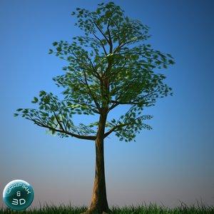 3d tree vegetation model