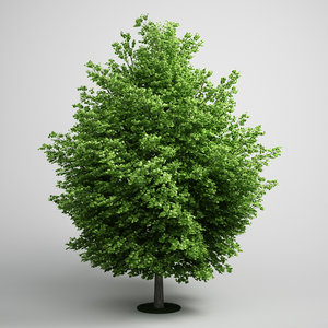 3ds max silver maple acer