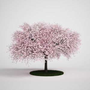 sour cherry prunus 3d model
