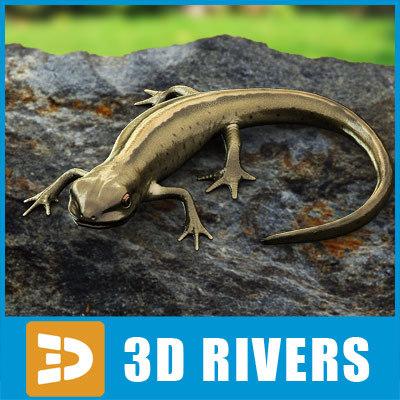 smooth newt lizards 3d model