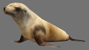 steller sea lion obj