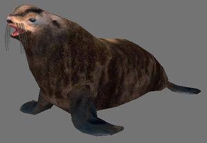 3d model of northern fur seals