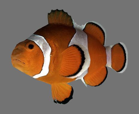 3d fish games