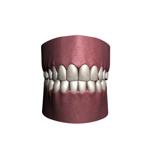polygonal human jaw 3d model