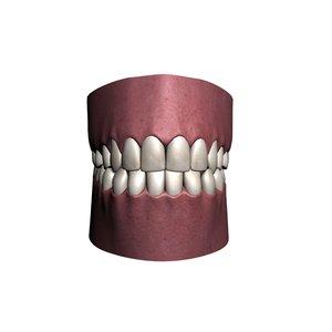 polygonal human jaw 3d model
