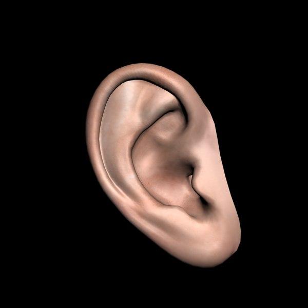 polygonal human ear 3d 3ds