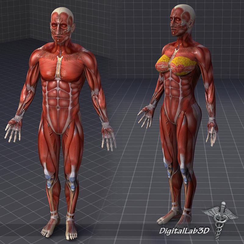 male female muscular 3d model, Muscles