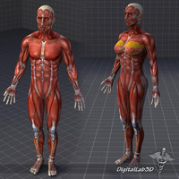 Collection - Human Male and Female Muscular System