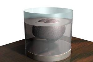 brain glass 3d model