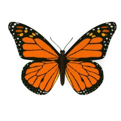 butterfly danaus plexippus 3d model