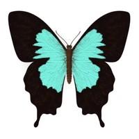butterfly papilio 3d model