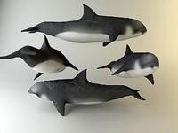 dolphin n_3