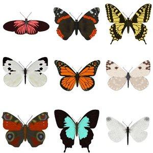 realistic butterflies 3d model