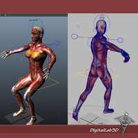 3d model rigged male female muscular