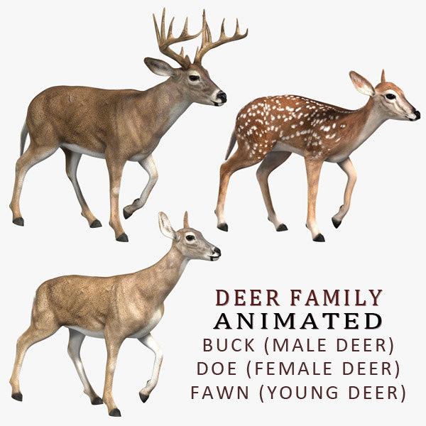 deer family 3d model