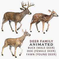 Deer Family (ANIMATED)