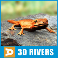 Red-spotted Newt by 3DRivers