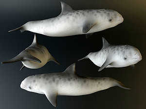 artic dolphin 3d max