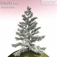silver fir tree 3d model