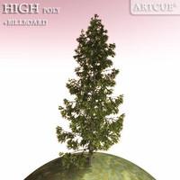 spruce tree 3d model
