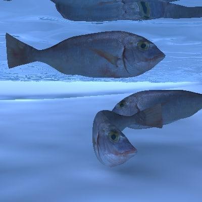 fish resolution water obj