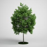 CGAXIS tree 07