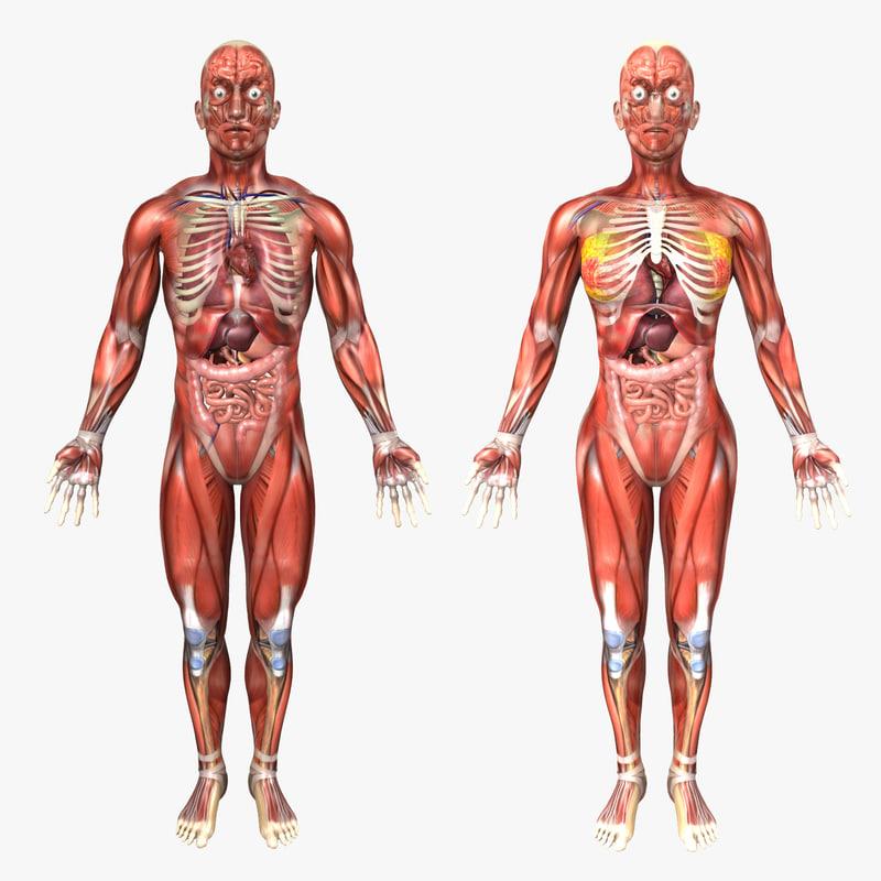3d C4d Human Male Female Anatomy