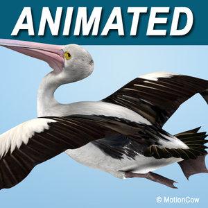 flying pelican 3d model