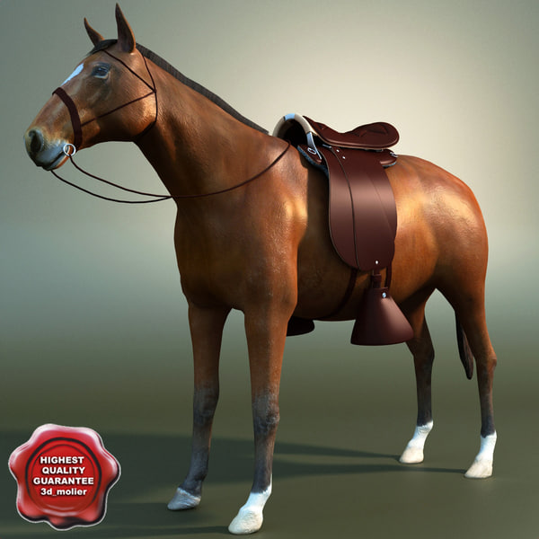 maya saddle horse