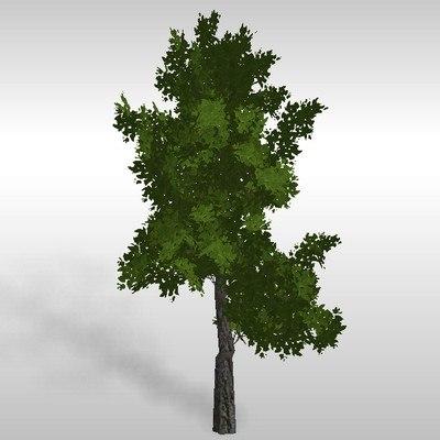 hi-poly oak tree 3d model