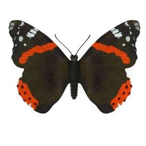 butterfly vanessa atlanta 3d model